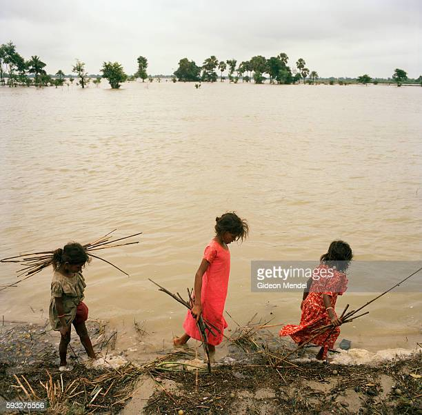 Children collect firewood from the edge of floodwaters alongside a road embankment in east Champaran Their families had to flee from their village of...