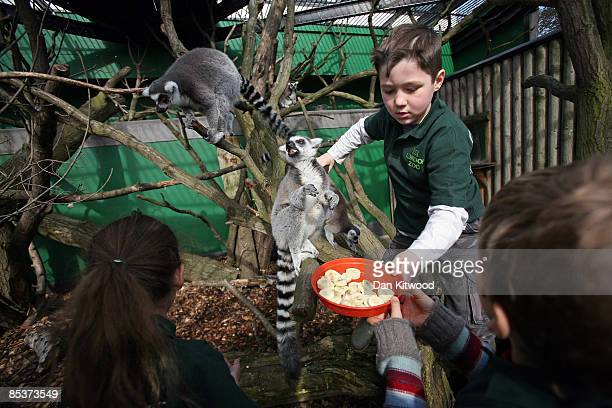 Children from Gower Primary helps feeds the Lemurs at London Zoo on March 11 2009 in London England A group of children from the school were given...