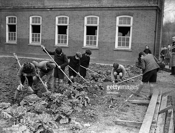 Children gardening during the Second World War c1939