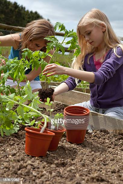 Children Gardening Planting Tomatoes