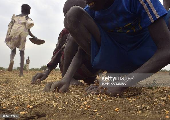 Children gather grain spilled from bags busted open following a fooddrop on February 24 2015 at a village in Nyal Panyijar county near the northern...