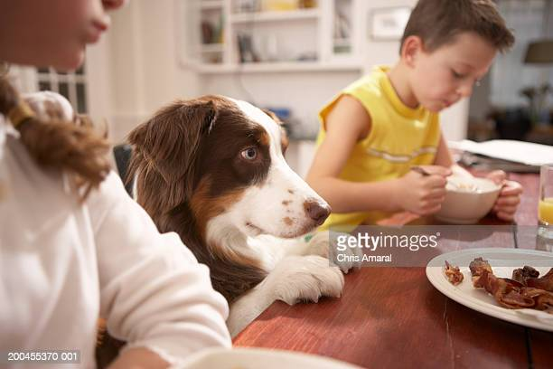 Crianças (6- 8) na cozinha à mesa com Cão