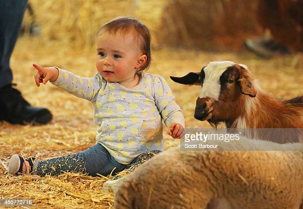Children interact with farm animals in the animal nursery at the 159th annual Royal Melbourne Show at the Royal Melbourne Showgrounds on September 20...