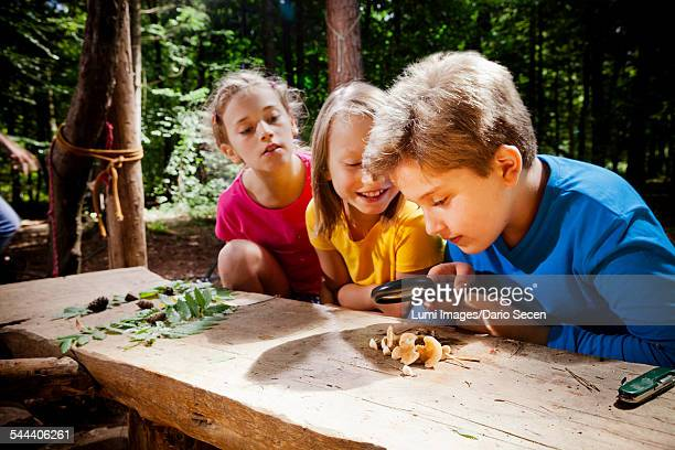 Children learning in a forest camp, Munich, Bavaria, Germany