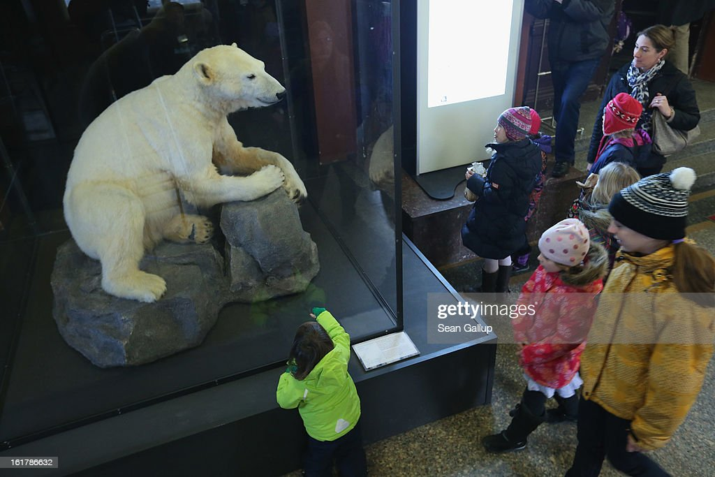 Children look at a model of Knut the polar bear, that features Knut's original fur, on the first day it was displayed to the public at the Natural History Museum on February 16, 2013 in Berlin, Germany. Though Knut, the world-famous polar bear from the Berlin zoo abandoned by his mother and ultimately immortalized as a cartoon film character, stuffed toys, and more temporarily as a gummy bear, died two years ago, he will live on additionally as a partially-taxidermied specimen in the museum. Until March 15, the dermoplastic model of the bear will be on display before it joins the museum's archive, though visitors can see it once again as part of a permanent exhibition that begins in 2014.