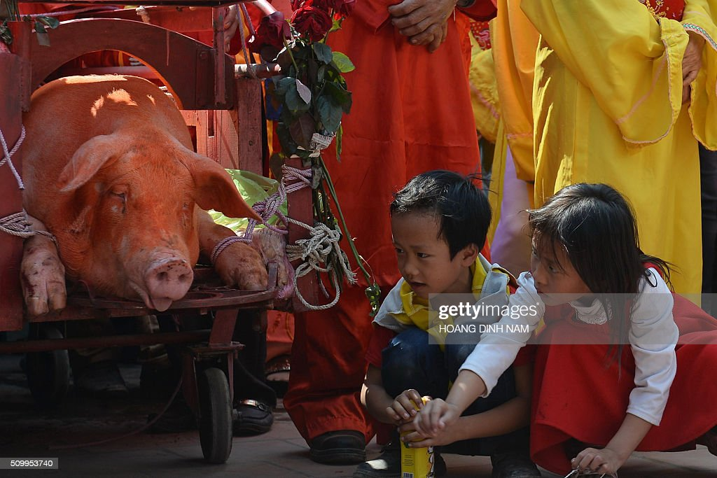 Children look at a sacrificial pig at the traditional pig-slaughter festival in Nem Thuong village in the northern province of Bac Ninh on February 13, 2016. Local authorities and villagers performed this year's ritualistic pig slaughter, which takes place on the sixth day of the Lunar New Year, out of public view following fierce criticism from animal rights groups. AFP PHOTO / HOANG DINH Nam / AFP / HOANG DINH NAM
