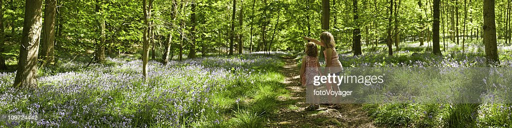 Children looking at nature idyllic summer wilderness forest trail panorama : Stock Photo