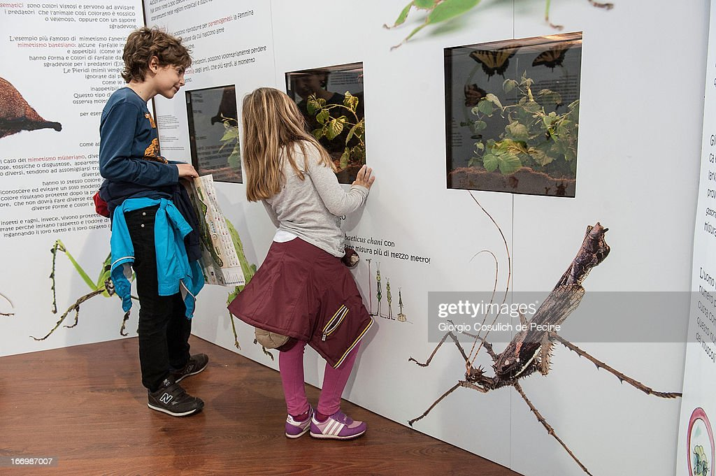 Children observe insects in glass cases during the opening of the new butterfly and insect section at the Bioparco on April 19, 2013 in Rome, Italy. A new greenhouse measuring 80 square metres will be unveiled at the capital's famous zoological gardens, where visitors will be able to walk amongst tropical butterfiles and a variety of insects.