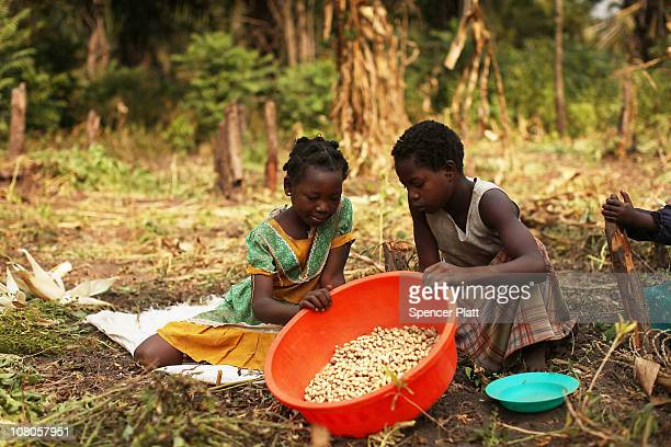 Children pick groundnuts January 15 2011 in the countryside outside of the town of Yambio south Sudan Yambio a poor and isolated town near the...