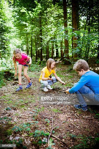 Children picking up firewood in forest, Munich, Bavaria, Germany