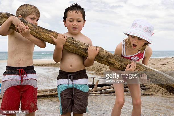 Children (3-7) picking up log on beach