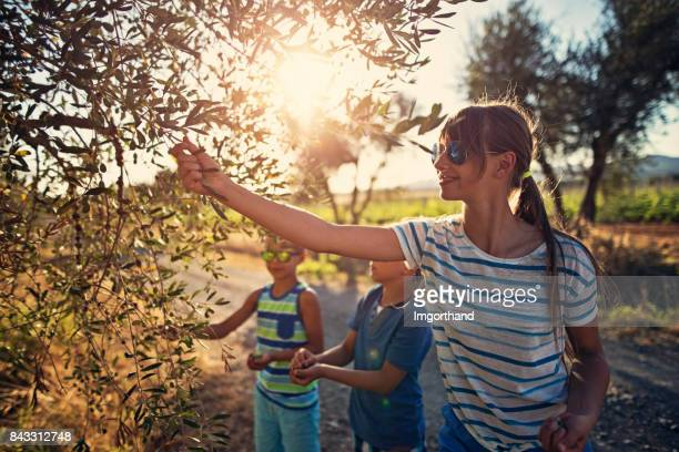 Children picking up olives in olive grove, Tuscany, Italy