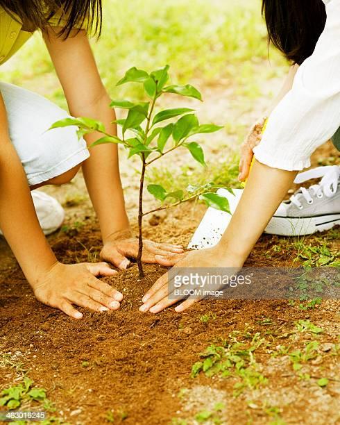 Children Planting A Plant