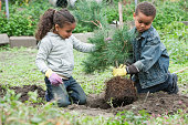 Children planting a tree together