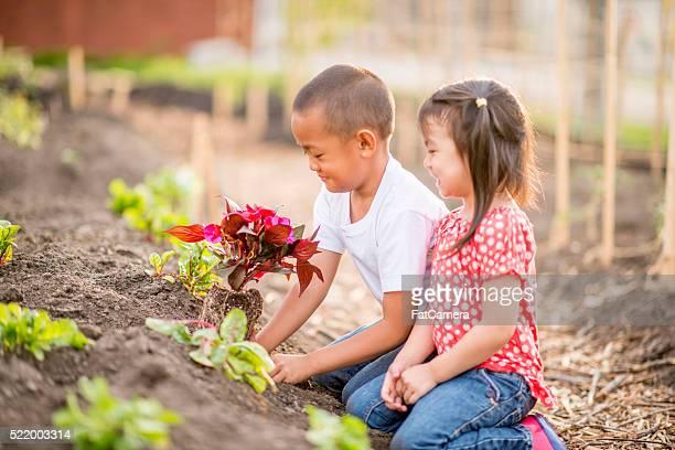 Crianças Plantação de flores