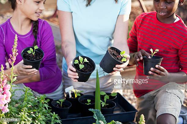 Children planting seedlings