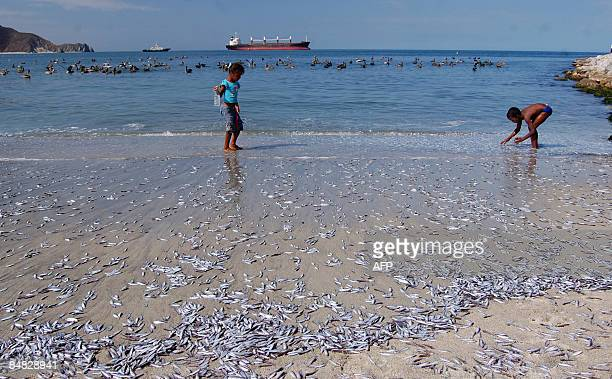Children play at the beach near dead sardines on February 15 in Santa Marta Magdalena department Colombia According to local authorities about one...