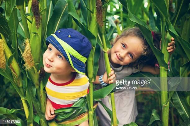 Children play in the corn field