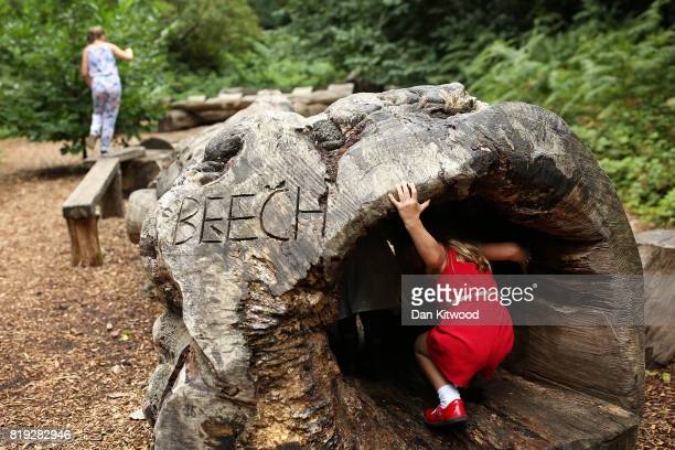 Children play on a 'log walk' during a photocall at Kew Gardens on July 20 2017 in London England The Kew Gardens Summer festival includes a newly...