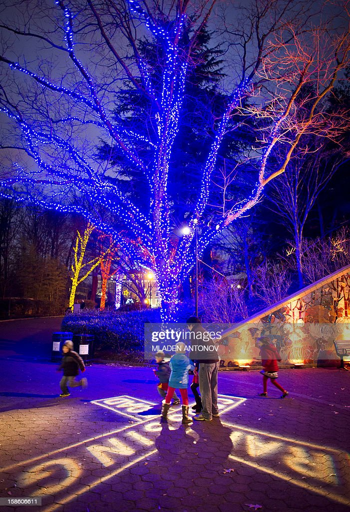 Children play on the main alley of the National Zoo, decorated for the forthcoming holidays in Washington DC, December 14, 2012.