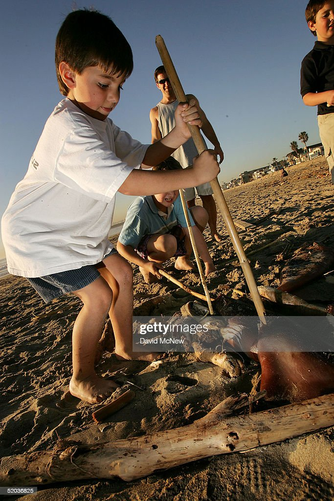 Children poke sticks at a giant squid that washed ashore on January 19, 2005 in Newport Beach, California. Scientists are trying to figure out why hundreds of the three- to four-foot-long squids washed up overnight along the southern California coast. One theory suggests that the squid may have run ashore while chasing grunions, small fish that lay their eggs on the land during the high tides of summer, as they passed close to shore. Other factors, such as unseasonably warm ocean temperatures, the recent record rainfalls, and the sudden summer-like weather are also suspected.
