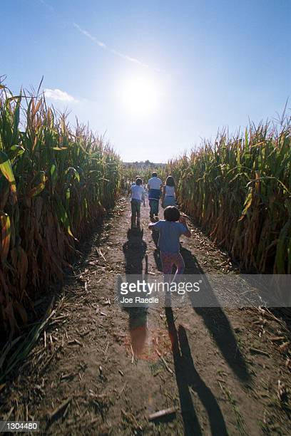 Children run through rows of corn as they try to find their way out of the ten acre cornfield maze October 19 2000 in La Union NM The local farmer...