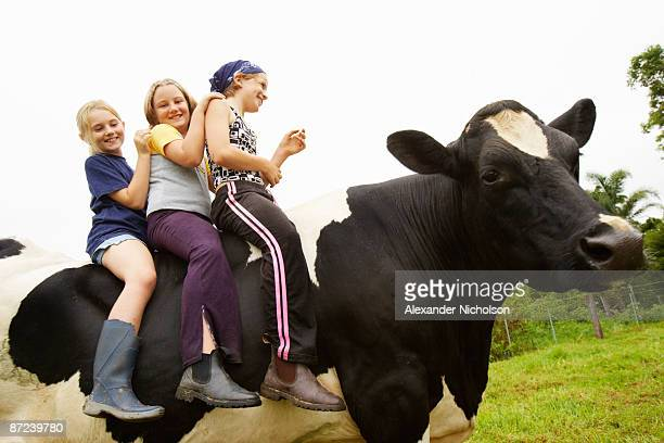 children sit on cows back