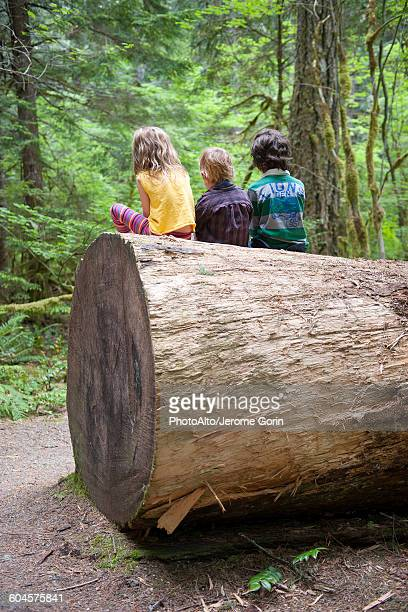 Children sitting together on large tree trunk, rear view
