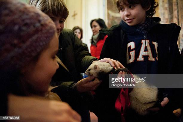 Children stroke a ferret as he attends with its owner a traditional mass for the blessing of animals at the Sant'Eusebio church on January 19 2014 in...