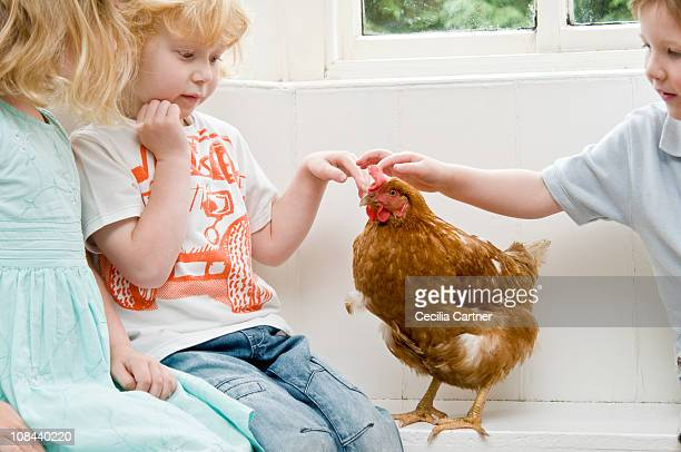 Children stroking a chicken