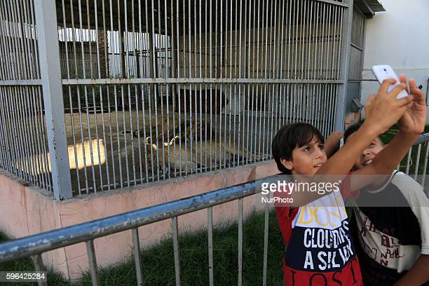 Children take a selfie with behind Lions lays in a metal cage in Jabalya Zoo in North Gaza Strip Friday Aug 27 2016 An international animal welfare...