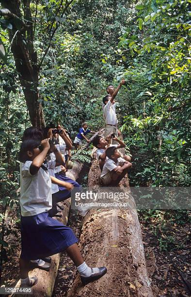 Children Thailand Krabi Province Children Being Taught To Care For The Forest