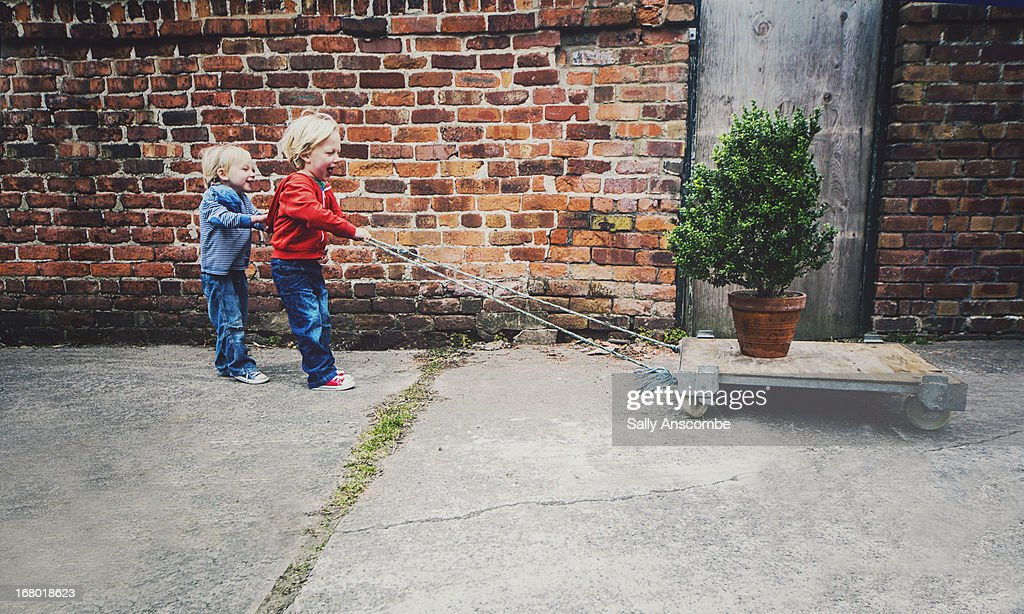 Children trying to move a tree : Stock Photo
