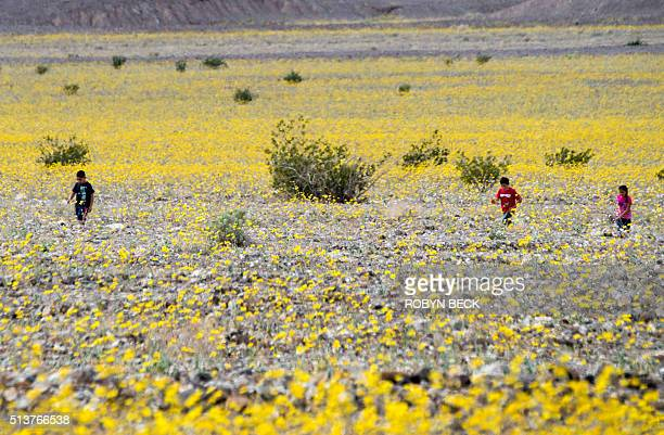 Children walk among wildflowers in Death Valley National Park in Death Valley California March 3 2016 Unusally heavy rainfall in October trigged a...
