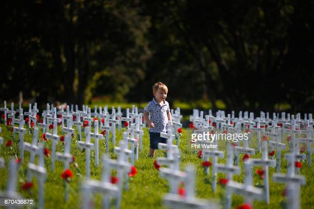 Children walk through a field of memorial crosses on the lawn in front of the Auckland War Memorial Museum on April 20 2017 in Auckland New Zealand...