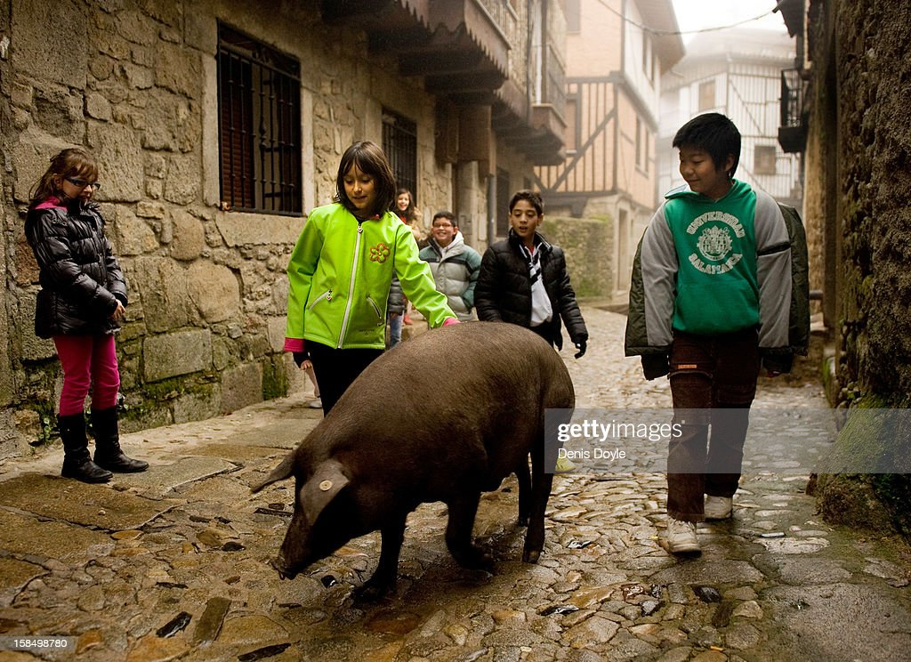 Children walk with an Iberian pig in the village of La Alberca on December 14, 2012 near Salamanca, Spain. The pig is free to roam in the village until it is sacrificed on January 21st in a village raffle with the proceeds going to a local charity. Spaniards normally consume large quantities of their favoured Jamon Iberico and producers are hoping for improved sales over the busy holiday callender. The jamon legs are usually dry-cured for up to three years after the pigs have been few on a diet of acorns in the last three months of their lives.