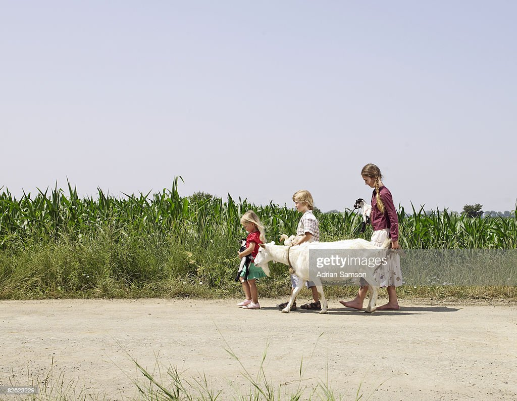 3 children walking with animals in front of field : Stock Photo