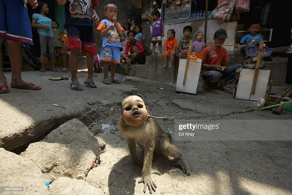 Children watch a monkey perform in the Muara Baru slum area which sits in a flood plain near Jakarta's biggest dam on September 11, 2013 in Jakarta, Indonesia. Residents of the area which the government is trying to restructure to prevent future flooding have been asked to move to government sponsored housing and some now face eviction by the government.