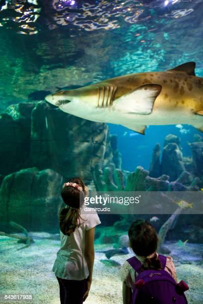 Children watching giant shark in fantasy underwater aquarium