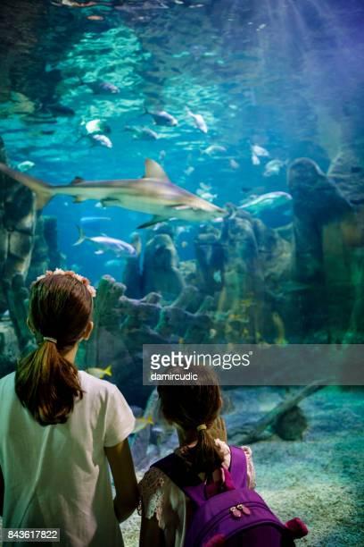 Children watching  shark in fantasy underwater aquarium