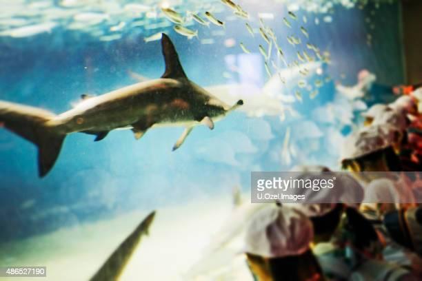 Children Watching The Shark in The Aquarium ***Defocused Image***