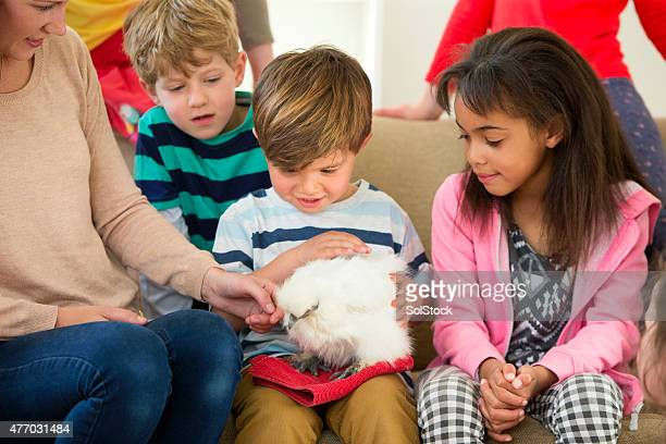 Enfants avec des animaux domestiques de poulet