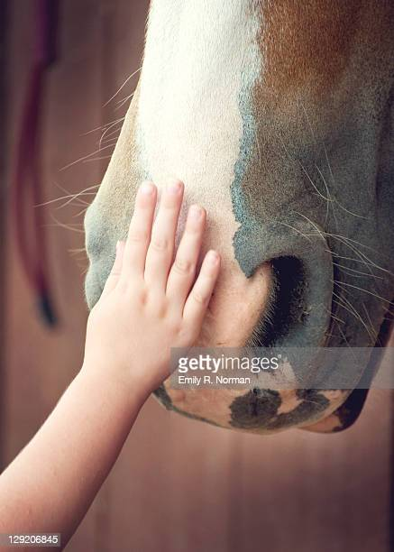 Child's hand touching horse nose