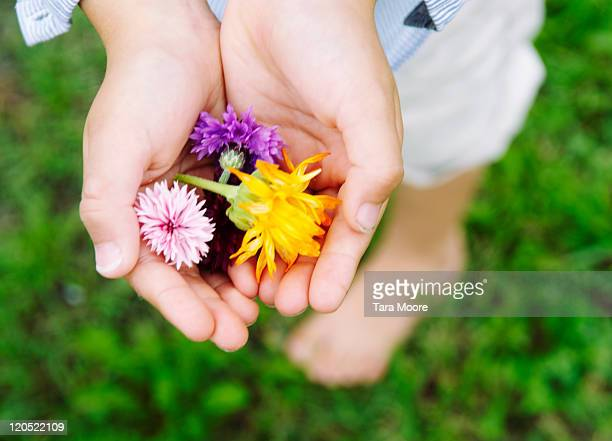 child's hands holding wild flowers