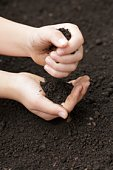 A child's hands picking up soil from the ground
