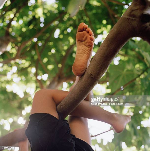 Child's legs wrapped around a tree branch