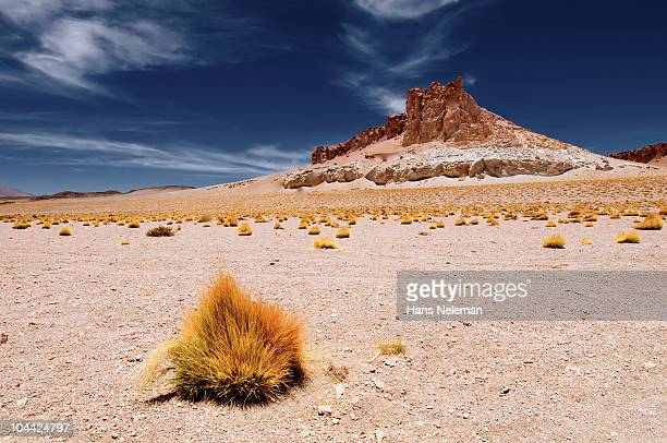 Chile, Atacama, Small plant in deserted landscape