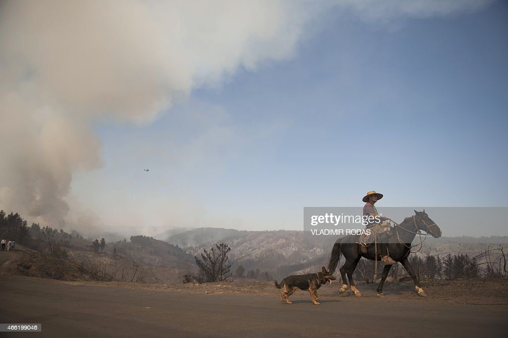 A Chilean cowboy going back home goes through areas affected by the forest fire in Valparaiso Chile on March 14 2015 Chile declared a state of...