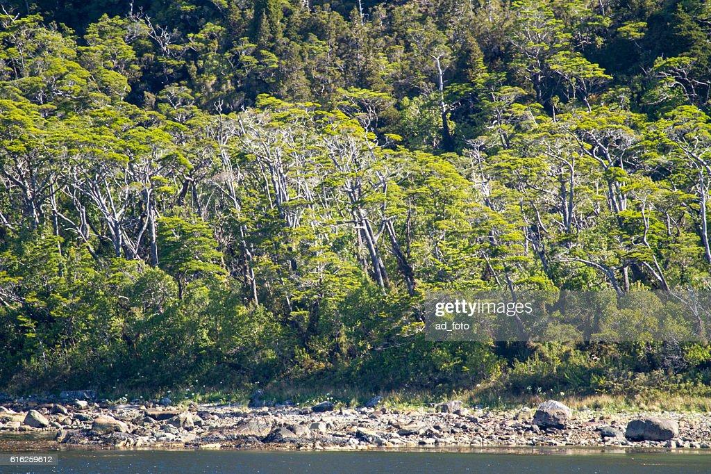 Chilean Fjords And Sarmiento Channel : Foto de stock