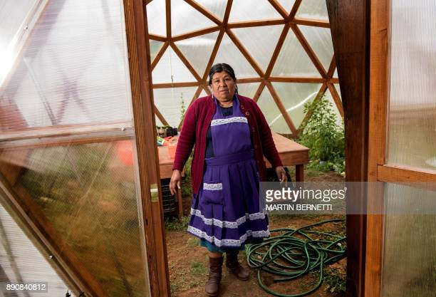 Chilean Mapuche teacher Flora Collonao poses at a school for Mapuche children in Temulemu Temuco on November 09 2017 The Mapuches which represent...